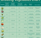 growing-vegetables-chart1