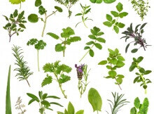 Large herb leaf selection in abstract design over white background.